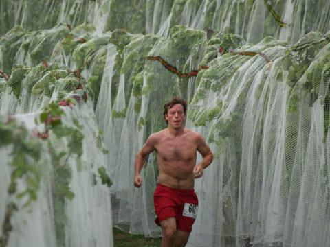 Running through the grapevines at the Harvest Stompede