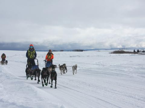 Competitors in the American Derby Dog sled race in Idaho